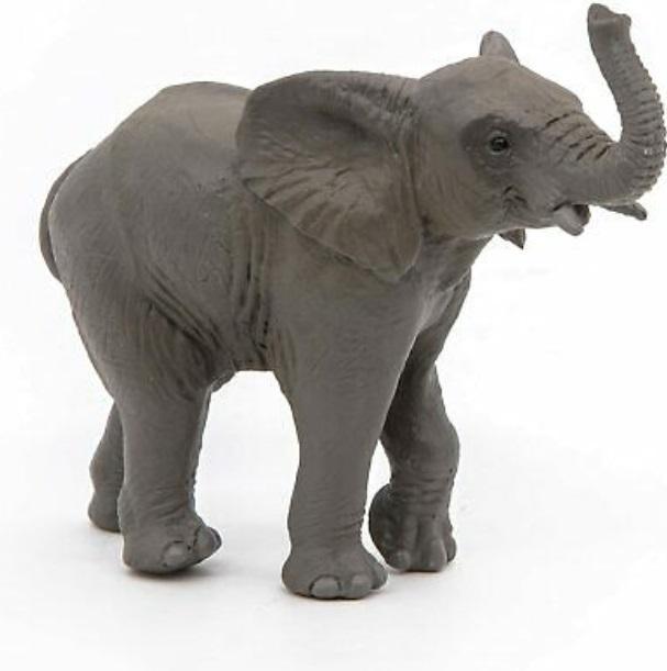 Słoń młody afrykański