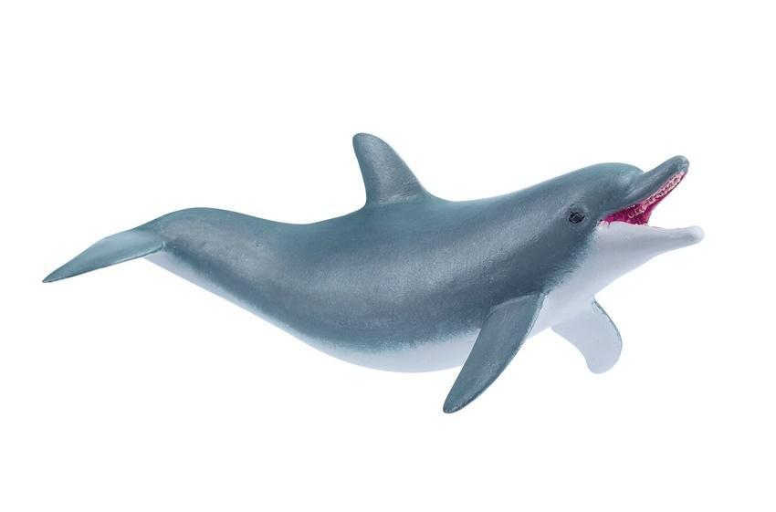 Delfin bawiący się