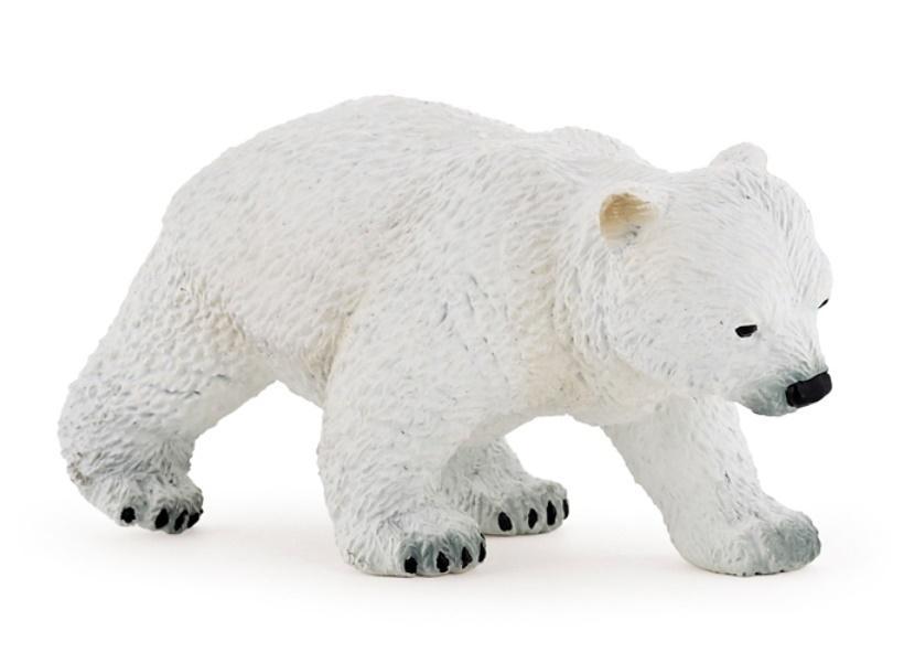 Niedźwiedź polarny młody