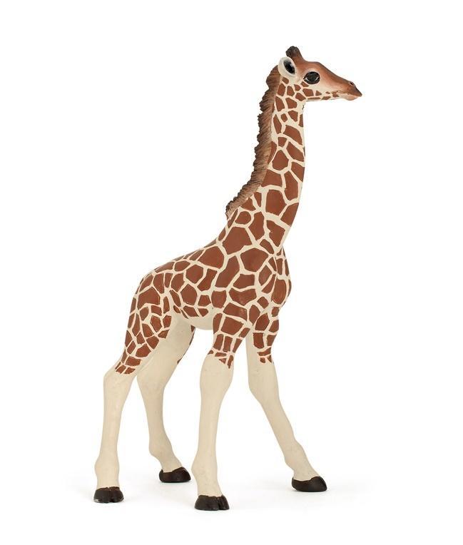 Żyrafa młoda