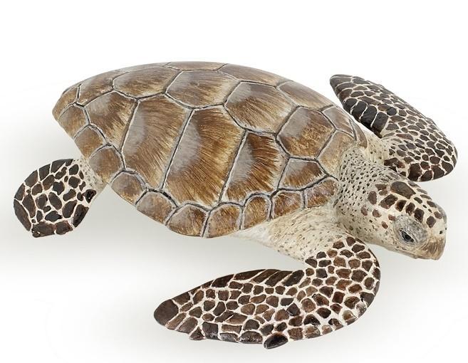 Żółw karetta
